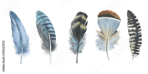 Watercolor bird feather from wing isolated. Aquarelle feather for background, texture, wrapper pattern, frame or border. - 123525570