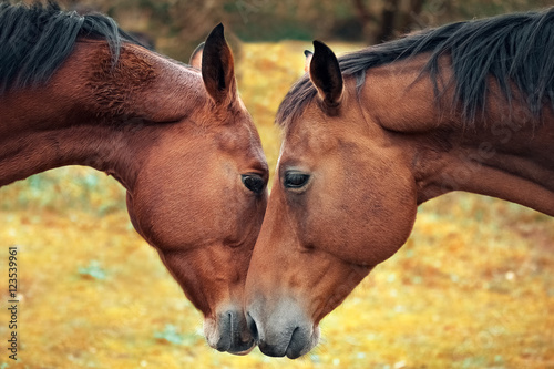 Horse love and tenderness