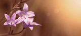 Website banner of a beautiful pink flower with copy space