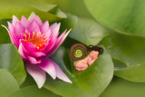 Baby snail sleeping on waterlily leaf