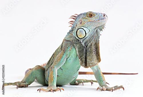 Fotobehang Kameleon skin lizard