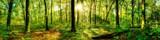 Fototapety Waldpanorama mit Sonnenstrahlen