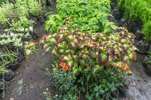 young plants in nursery bags