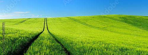 Papiers peints Vert chaux Endless Green Fields, Rolling Hills, Tractor Tracks, Spring Landscape under Blue Sky