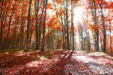 Autumn red forest landscape with sunrays