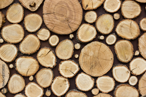 Fototapeta Wood texture background have many logs that cut from big and small tree