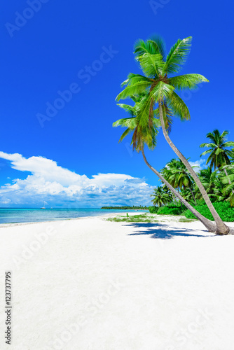 Fotobehang Donkerblauw paradise tropical beach palm