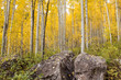 Boulders and golden aspen in the San Juan National Forest in Colorado