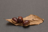 Three chestnuts with autumn leaves on dark background