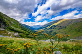 Дикий цветок на фоне гор
