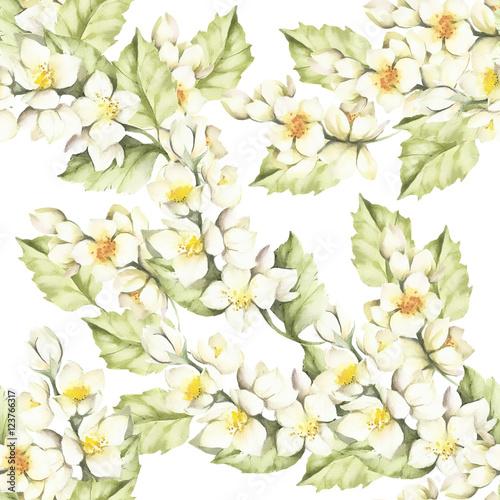 Fototapeta Seamless pattern with Jasmine. Hand draw watercolor illustration