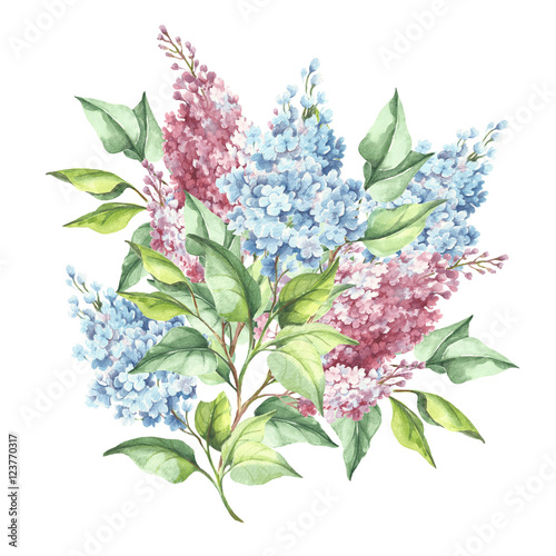 Flowering branch of lilac. Hand draw watercolor illustration