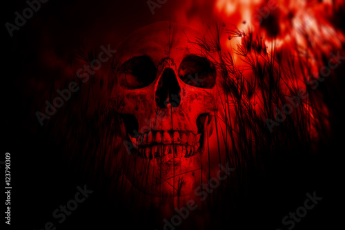 Human skull in the woods,Horror Background For Halloween Concept And Movie Poste Poster