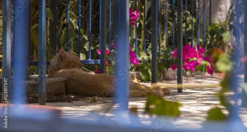 Grecja, Ateny, kot na ulicy