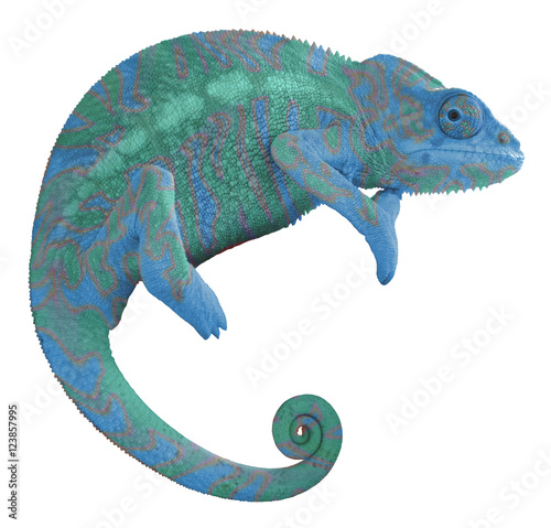 Fotobehang Kameleon Colorful Chameleon