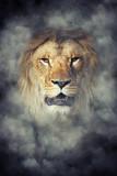 Lion in smoke on dark background