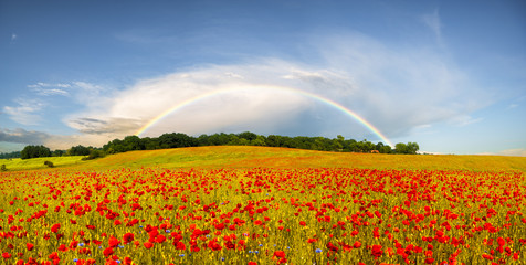 panorama makowej łąki,w tle tęcza