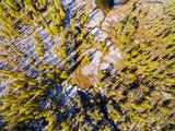 vista aerea di ruscello e larici in autunno