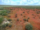 Orange grass in the steppe.