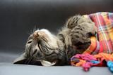 kot śpiący słodko jak dziecko, przykryty kolorową chustą