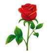 Red rose cartoon style