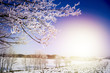 Frozen Tree Branches. Winter Landscape.