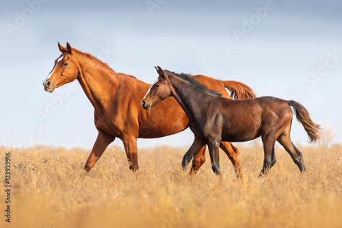 Poster Mare and foal run on outomn pasture