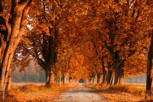 Poster Oranje eclat Herbsttag