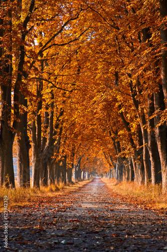 Poster Oranje eclat Herbstallee