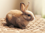 Sitting cute baby bunny rabbit