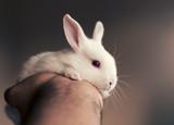 Cute baby bunny rabbit in man's hand