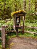 Abandoned Phone booth into the Hoh Rain Forest,