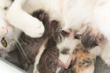 cat breastfeeding baby