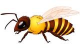 Cartoon wasp