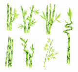 Watercolor bamboo set. Tropical exotic asian tree for decoration.