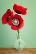 Vibrant red poppy flower in vase