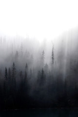 Morning mist rises from conifer forest