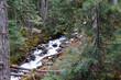 Joffre Creek cascades down ravine