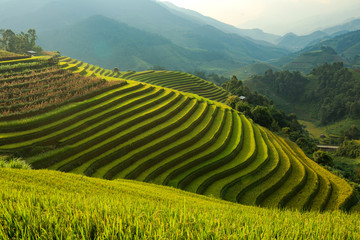 mountain rice terraces