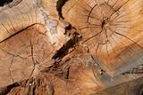 bois matière arbre noble matière texture coupe tronc forêt  - 124133159