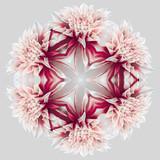 Fototapety Dahlia_kaleidoscope_6_2