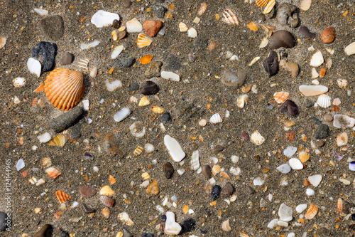 conchas-de-mar-sobre-fondo-de-arena