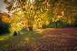 Leinwanddruck Bild - Sitzendes Paar in der Ferne auf der Neckarinsel Tübingen im Herbst