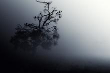 Spooky fondo oscuro árbol Noche ./Halloween.