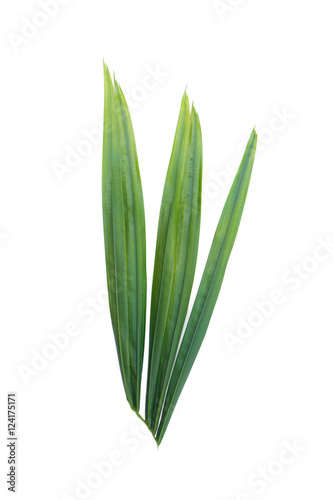 Aluminium Palm boom Green leaf of palm tree isolated on white background