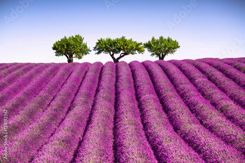Zdjęcia na płótnie, fototapety na wymiar, obrazy na ścianę : Lavender and trees uphill. Provence, France