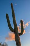 Saguaro National Park - 124195590