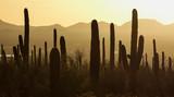 Saguaro National Park - 124195750
