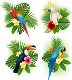Fototapety Tropical flower and bird collection set
