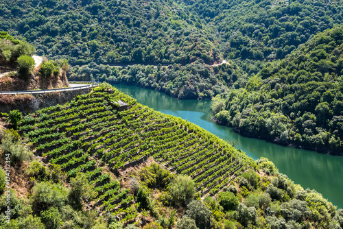 Vineyards along Sil River, Ribeira Sacra, Lugo (Spain)
